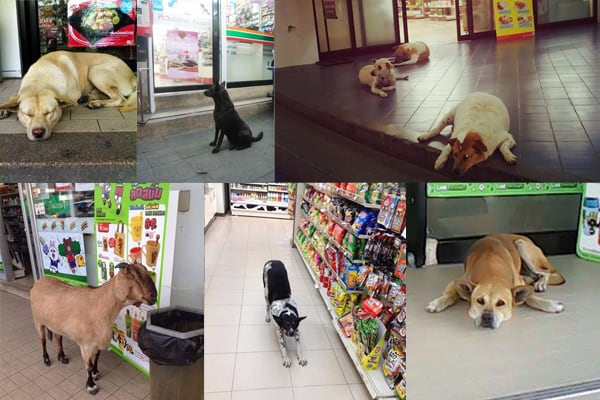 dogs outside and inside of 7 eleven stores in Thailand