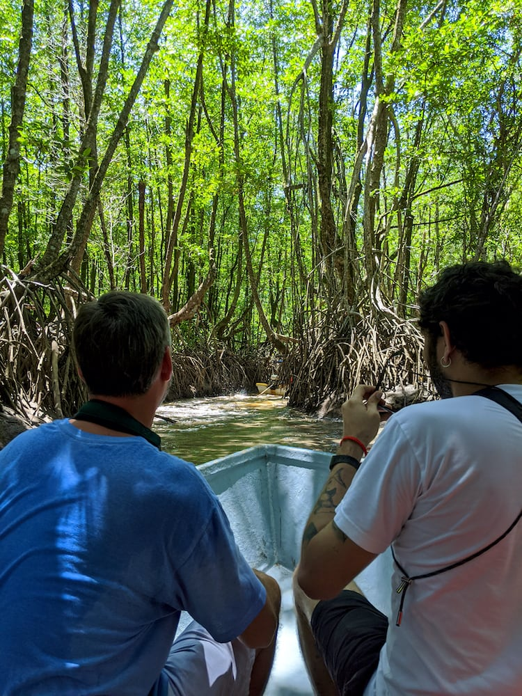 boat_cruise_mangrove_forest_trat_province