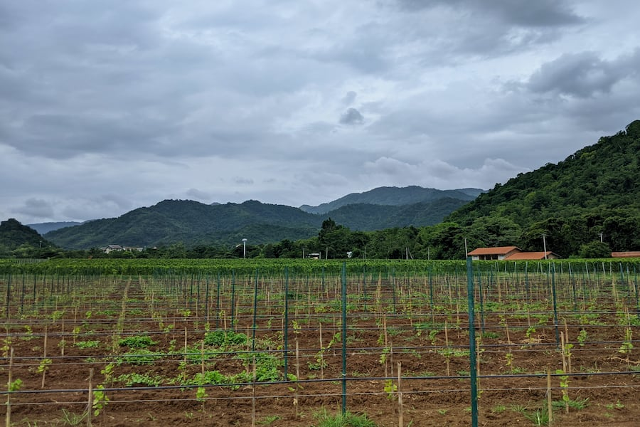 granmonte vineyard in khao yai