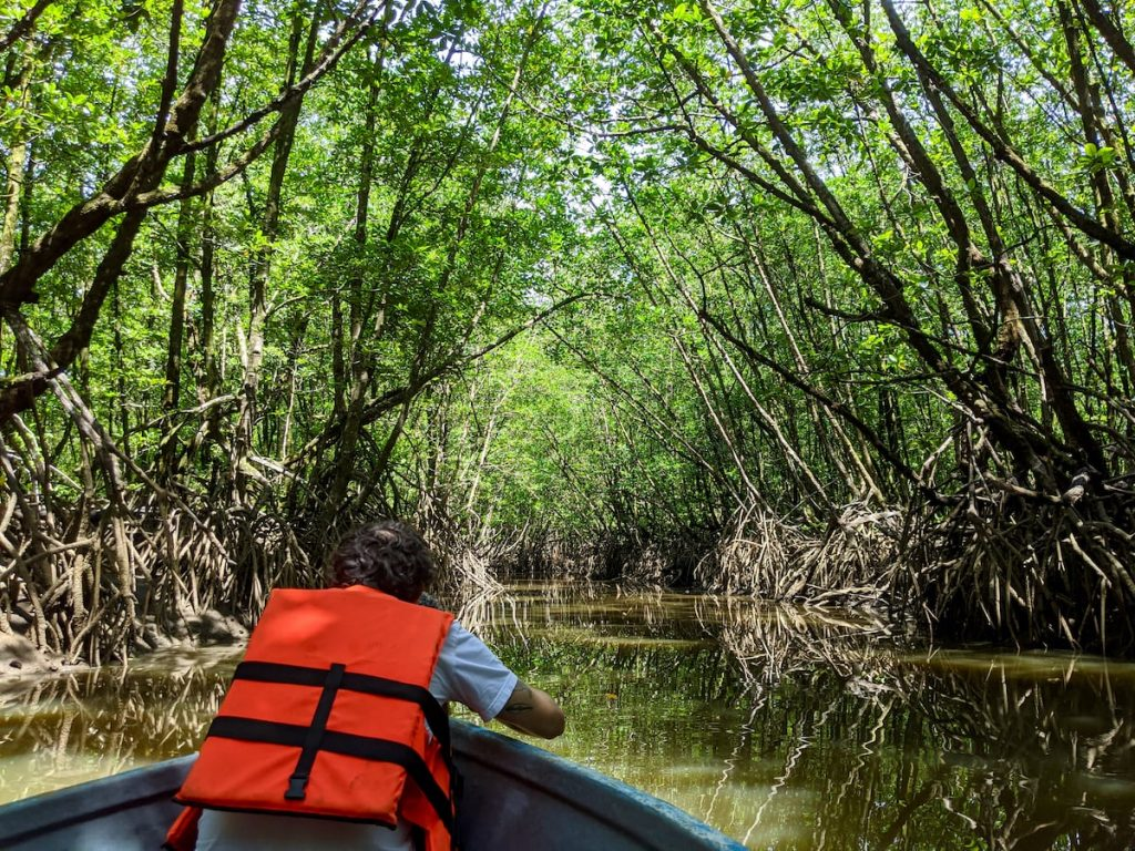 mangrove_forest_trat